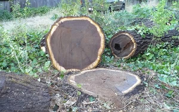 قطع چوب گردو