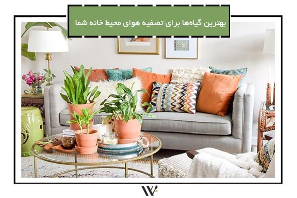 بهترین گیاها برای تصفیه هوای خانه شما